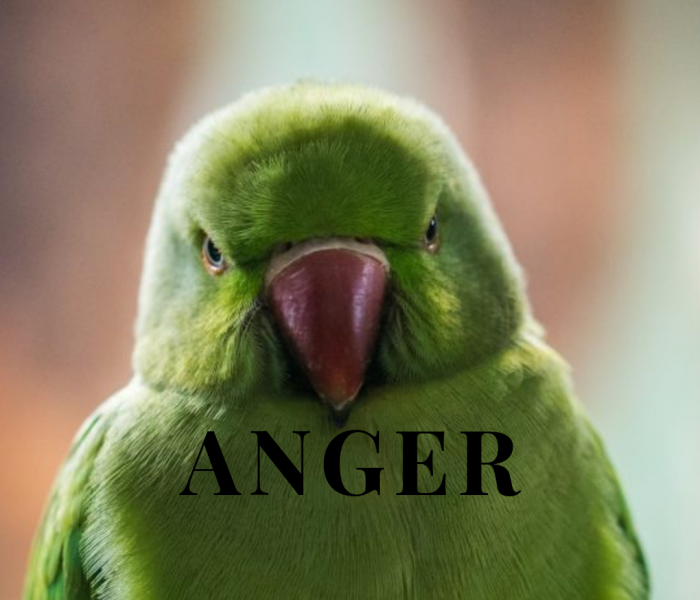 Anger Management – Healthy Ways To Mindfully Release Anger